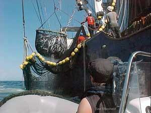 pesca industrial de atún rojo