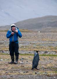 pingüino emperador negro fotografiado