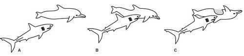 secuencia del ataque del tiburón al delfín