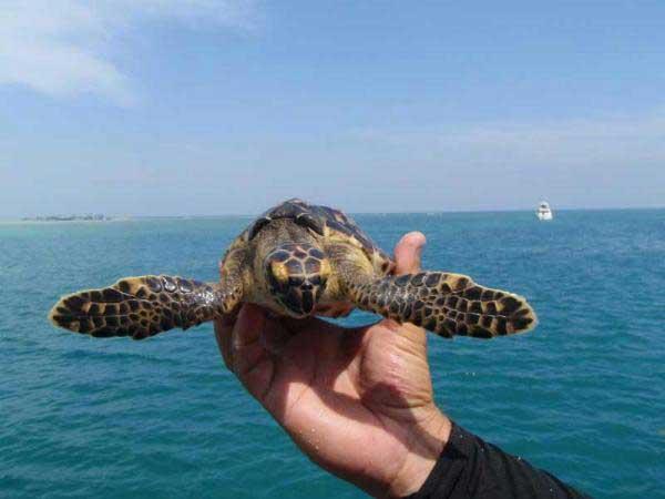 tortuga marina, viaje