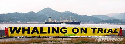 Pancarta de Greenpeace pidiendo un Juicio a la caza de ballenas