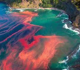 marea de algas rojas