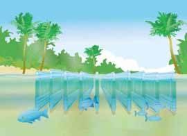 aplicacion potencial de las microalgas