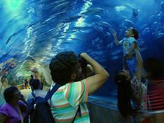 Oceanografic Valencia, acuario