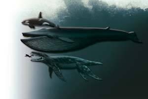 comparación tamaños, plesiosaurio, ballena, delfín y hombre