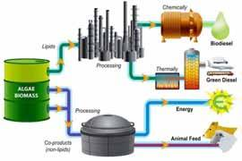 proceso de las microalgas