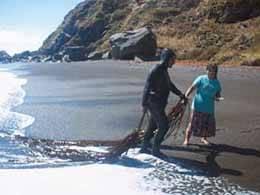recogida del alga cochayuyo