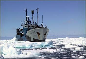 steve irwin en el ártico