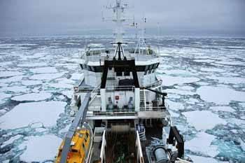 tangaroa en los hielos
