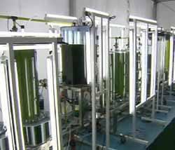 tanques de microalgas BFS