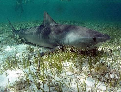 Tiburón en el fondo del Mar