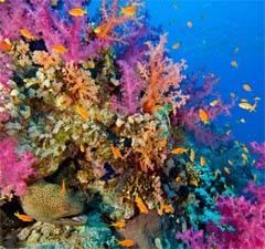 vida entre los corales