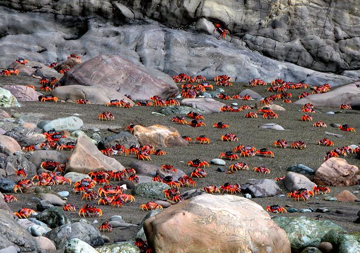 Un torrente de cangrejos corriendo hacia el mar - Vista al Mar _ ...
