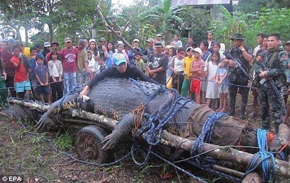 Cocodrilo marino gigante capturado en Filipinas (fotos y ...