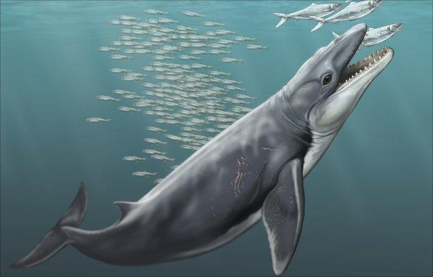 Resultado de imagen para paleoceno fauna acuática