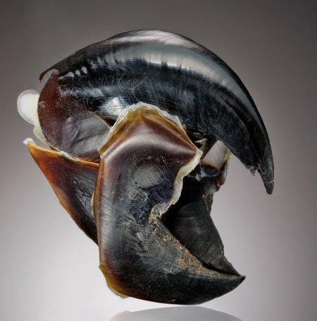 El pico del calamar es una maravilla de ingeniería biológica - Vista ...