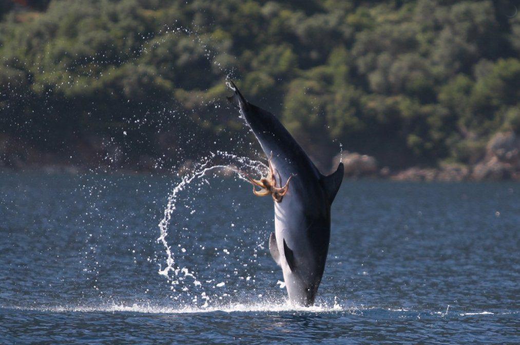 Pulpo se engancha en los genitales de un delfín - Vista al Mar _ ...