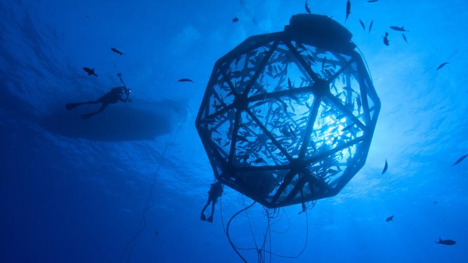 Vivir en el mar un paso m s cerca de la realidad for Jaulas flotantes para piscicultura
