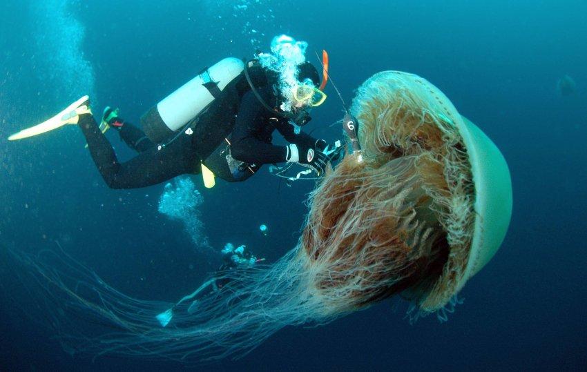 Medusas un problema global parte 2 y final vista al mar pe scola - Como se alimentan las medusas ...