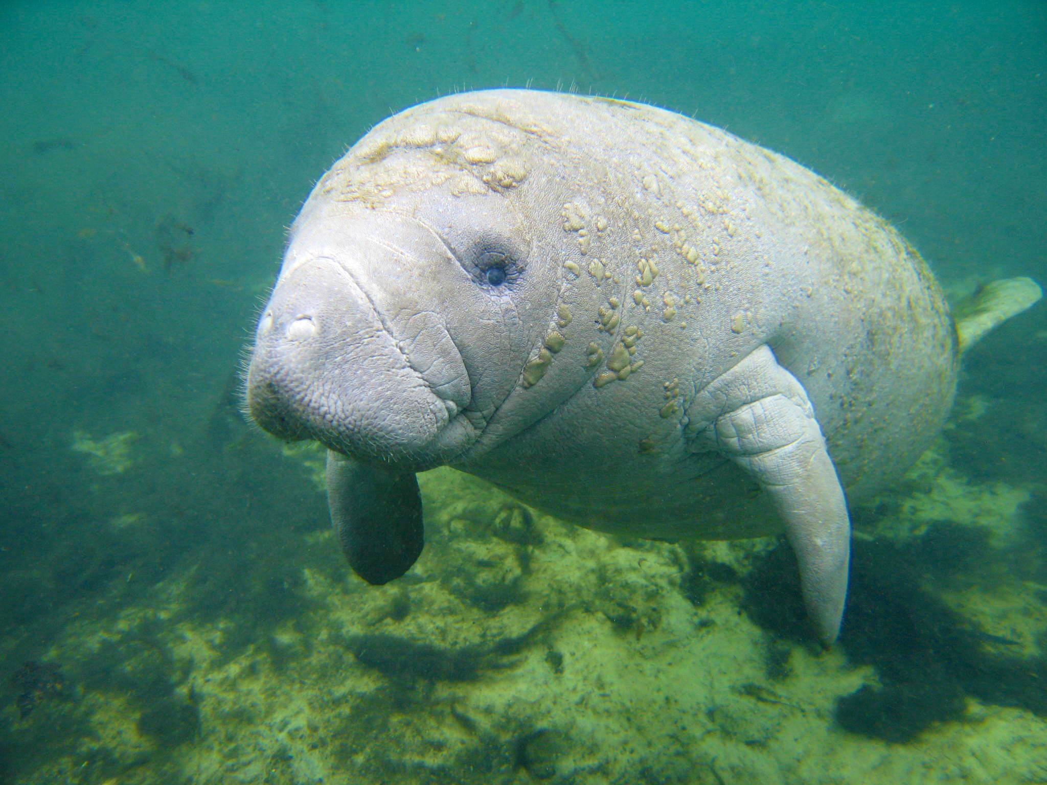 Los mamíferos marinos perdieron un gen que podría ayudarlos a ...