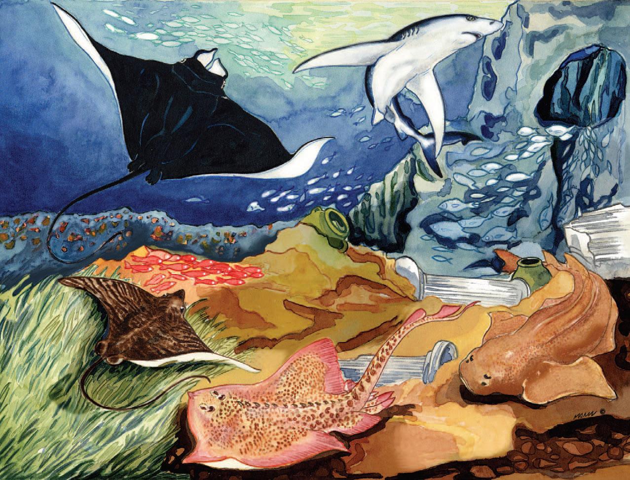 nuevo tiburones y rayas del mediterrneo y el mar negro