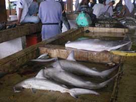 tiburones en una pescadería de Asia