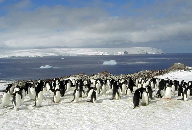 colonia de pingüinos en la Antártida