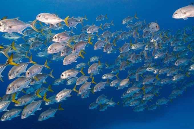 Resultado de imagen de bancos de peces de colores