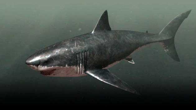Bigger Than Megalodon Shark Toy : Megalodon es posible que todavía exista frente a las