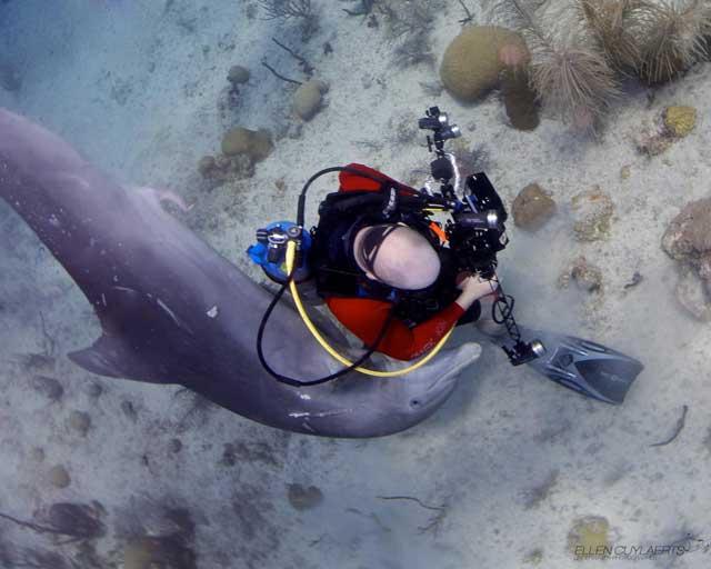 acoso de delfín a un buzo