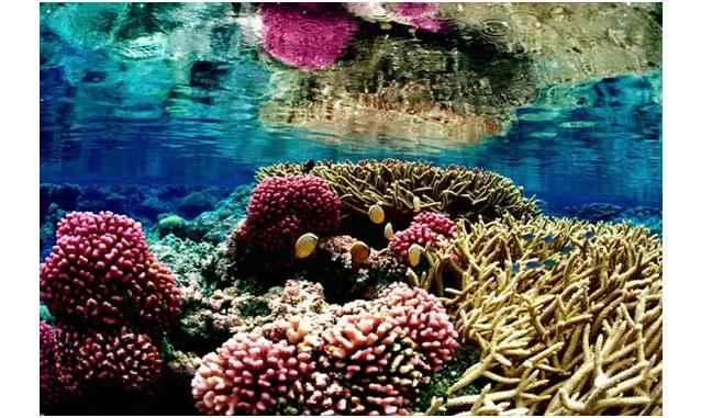 4 de las 10 superficies protegidas más grandes del mundo son territorio marino