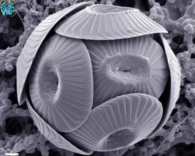 Antiguas algas marinas dan pistas de los efectos del cambio climático