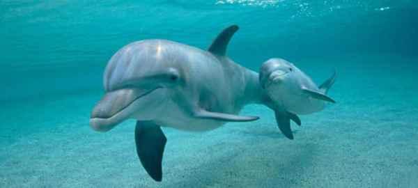 Encuentran arritmias cardíacas en delfines y focas