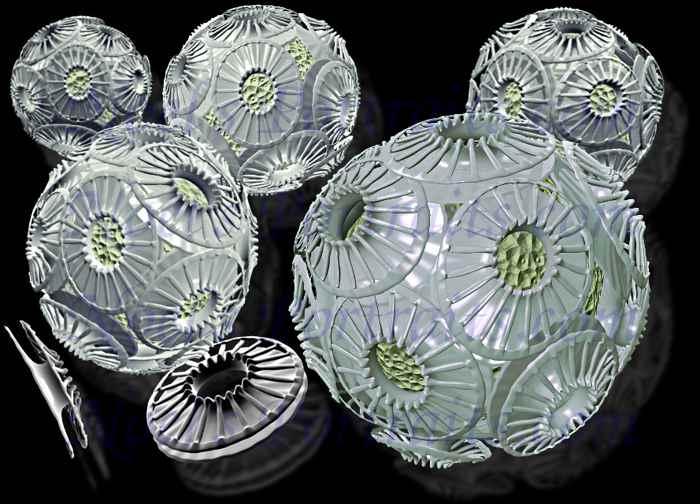 La muerte de una floración de fitoplancton
