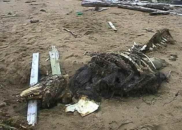 Horrorífica criatura de las profundidades aparece varada en una playa de Rusia