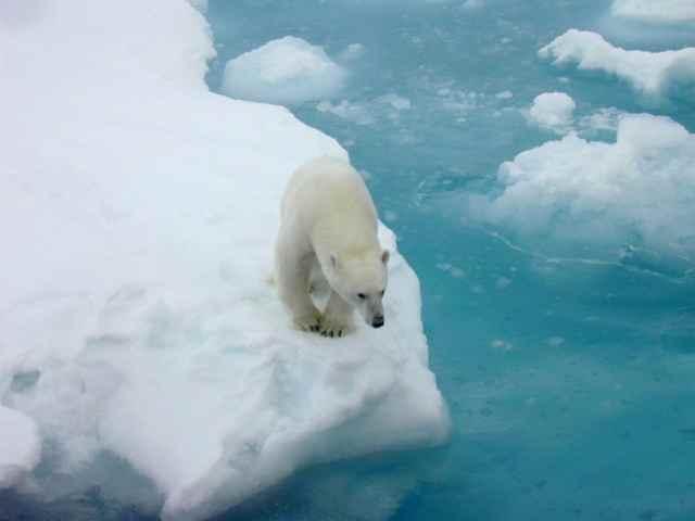 El Ártico se está calentando el doble que cualquier otro lugar en la Tierra