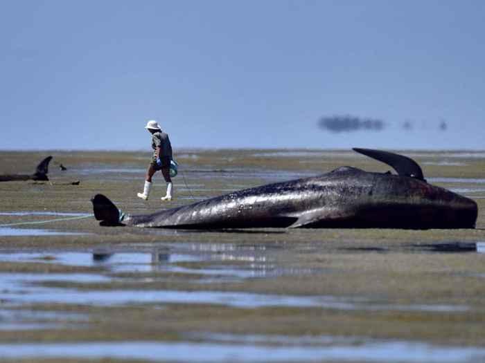 Puede haberse resuelto el misterio de cómo las ballenas evitan las ...