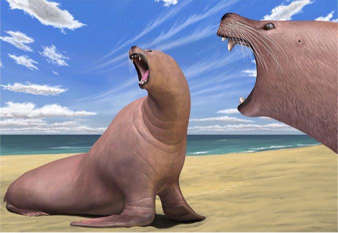 Antiguo primo de las morsas se parecía más a un león marino - Vista ...