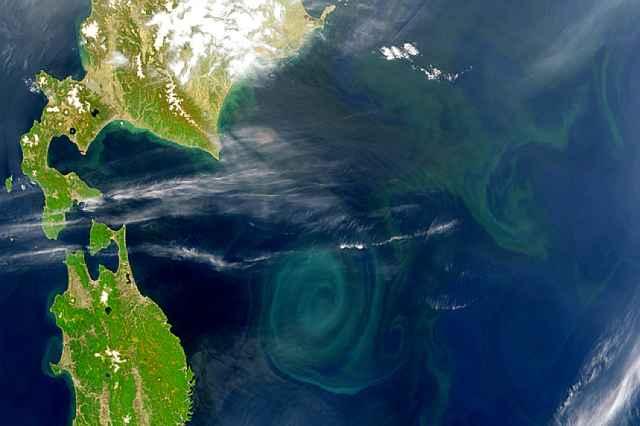 floración de fitoplancton en el océano