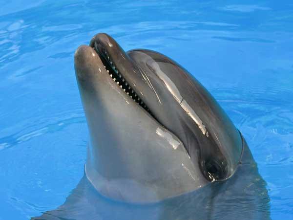 дельфины 2 фото