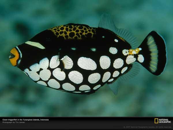 Top 10 de peces m s hermosos y coloridos vista al mar for Especies de peces