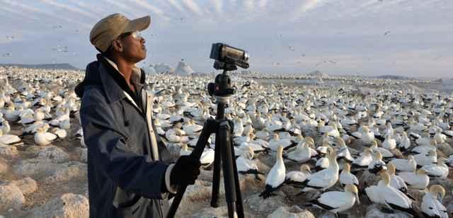 filmando un vídeo de alcatraces del Cabo