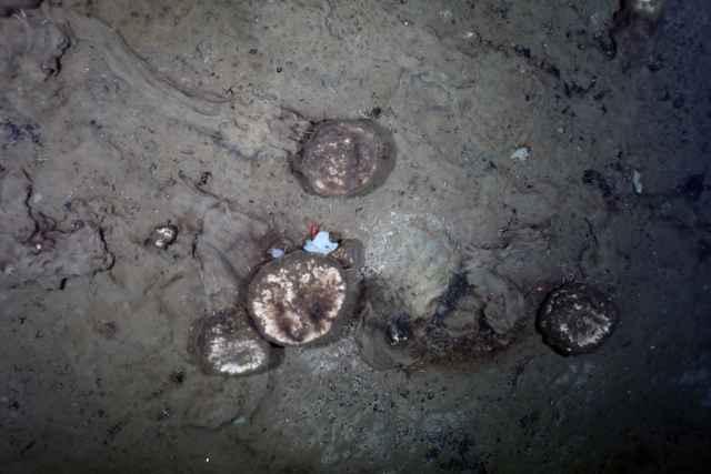 senderos de esponjas en el fondo del Ártico