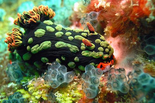 Sea Marine Animals