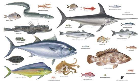 P ster peces del mar mediterr neo vista al mar pe scola for Variedad de peces